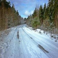 В лесу :: Натали Пам