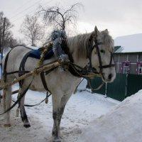 Новогодняя лошадка. Пора в путь :: Наталья Петровна Власова