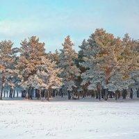 Сосны в зимнем наряде. :: Евгений Кузнецов