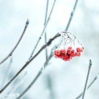Зимняя :: Анатолий Ковальчук