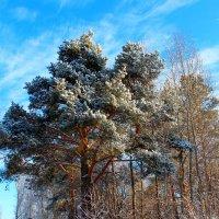 Зимнее небо :: Катя Бокова