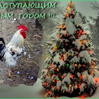 С  Наступающим  Новым годом ! :: Светлана