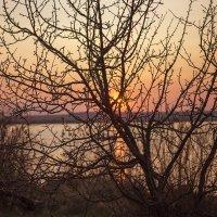 Тёплый весенний вечер :: Юрий Клишин