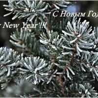 Всех с наступающим Новым Годом ! :: Aquarius - Сергей