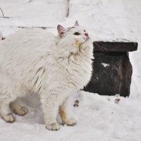Блондинка на снегу :: Ольга Винницкая