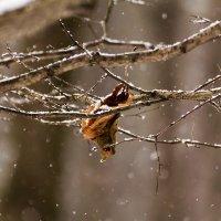 Снег идёт :: Александр