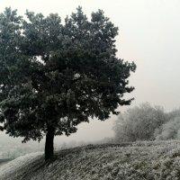 Зимняя дорога :: Эдвард Фогель