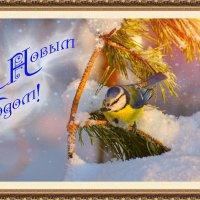 открытка :: linnud