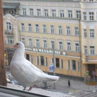 Москва, Садовое кольцо :: Maikl Smit