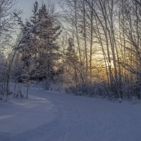 Зимний лес :: Андрей Костров