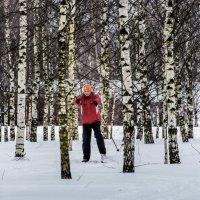 Лыжню! :: Владимир Безбородов
