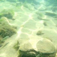 Отдых на море, Крым. Скнорлинг. Подводные пейзажи-24. :: Руслан Грицунь