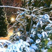 на даче снежно :: Алексей Совалев