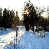 Солнечный день зимой... :: Aлександр **