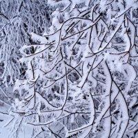 Зимние картинки... :: владимир