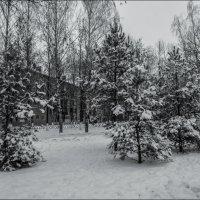 деревья в снегу :: Юлия Денискина