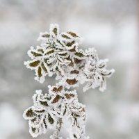 Снежные рисунки :: Вера Бережная