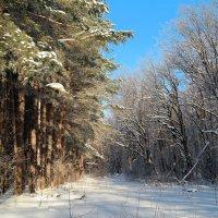 Зимние прогулки.. :: Андрей Заломленков