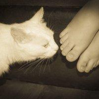 Хозяйские ноги-самые любимые!!! :: Ирина Холодная