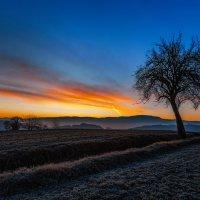 Дерево и закат. :: Sven Rok