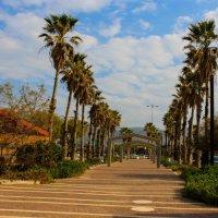 Декабрь в Израиле :: Николай Волков