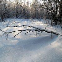 В анабиозе зимнем.. :: Андрей Заломленков