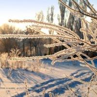 Ледяные украшения... :: Андрей Заломленков