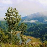 Утренний пейзаж с берёзой :: Сергей Чиняев
