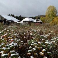 Первый снег :: Валерий Чепкасов