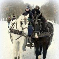 Лошадки  /3/ :: Сергей