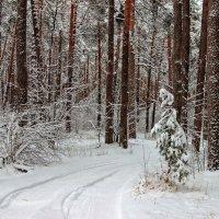 Лишь снежный шелест тишины... :: Лесо-Вед (Баранов)