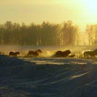 Мороз и кони. :: nadyasilyuk Вознюк