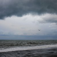 У моря :: Виолетта