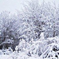 Зимняя красота :: Татьяна Королёва