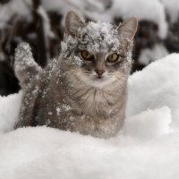 Первая зима! :: Клара