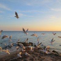 Море, чайки :: Эля Юрасова
