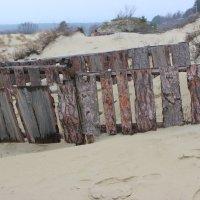 Так укрепляют дюны :: Марина Домосилецкая