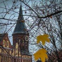 Калининград. Кафедральный собор. Глубокой осенью. :: Евгения Кирильченко