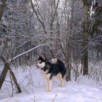 Бард на прогулке :: Светлана
