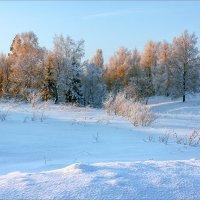 Зимний лес... :: Александр Никитинский