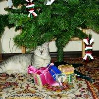 Это все мои подарки! :: Надежда