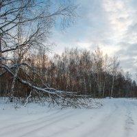 В зимнем лесу :: Андрей Куприянов