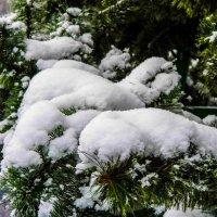 снежок на ветках :: Юлия Денискина