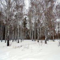 "Серия "" Зима "" № 2 :: Мила Бовкун"