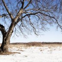 Зима :: Елена Зудова