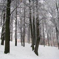 Царицыно зимой. :: Владимир Драгунский