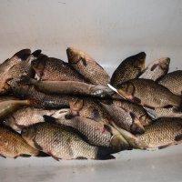 В Ростове много рыбы.... :: Agnivarshi Малтыз