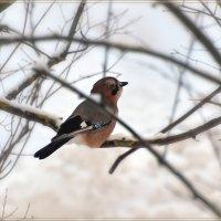 в лесу :: linnud
