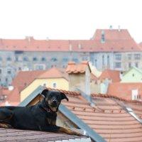 на крышах Чехии :: Наталья