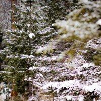 прогулка по зимнему лесу :: Valery